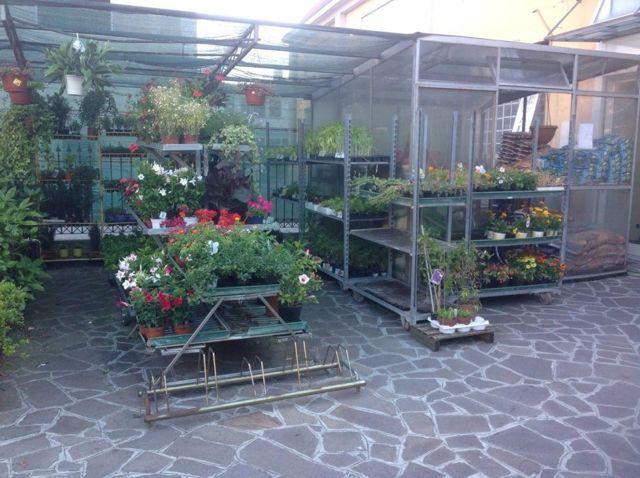 Offerta occasione promozione giardino piante orto fiori verde giardino casa agrisole crema