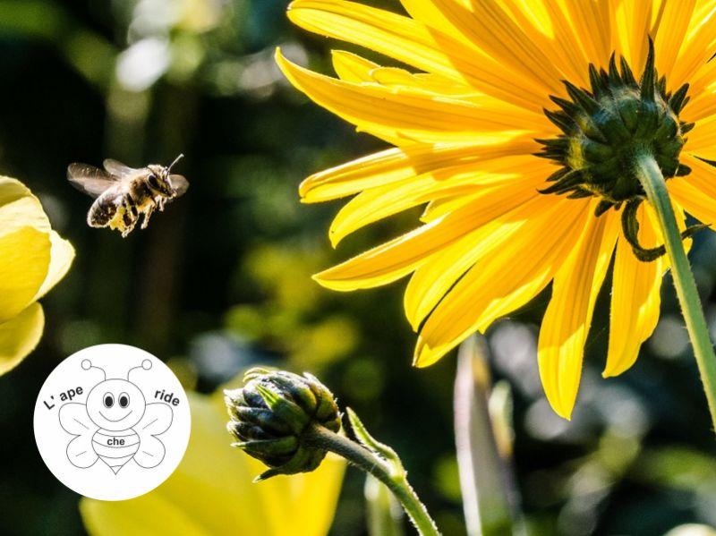 L'APE CHE RIDE DI BIDOJA ELENA offerta attrezzatura apicoltore - promozione affumicatore api