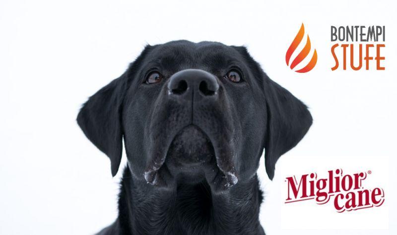AZIENDA BONTEMPI BRUNO offerta miglior cane alimenti specifici per animali - monoporzione cane